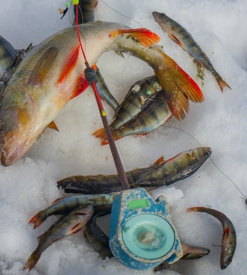 Best Baits to Catch More Yellow Perch + 15 Great Tips