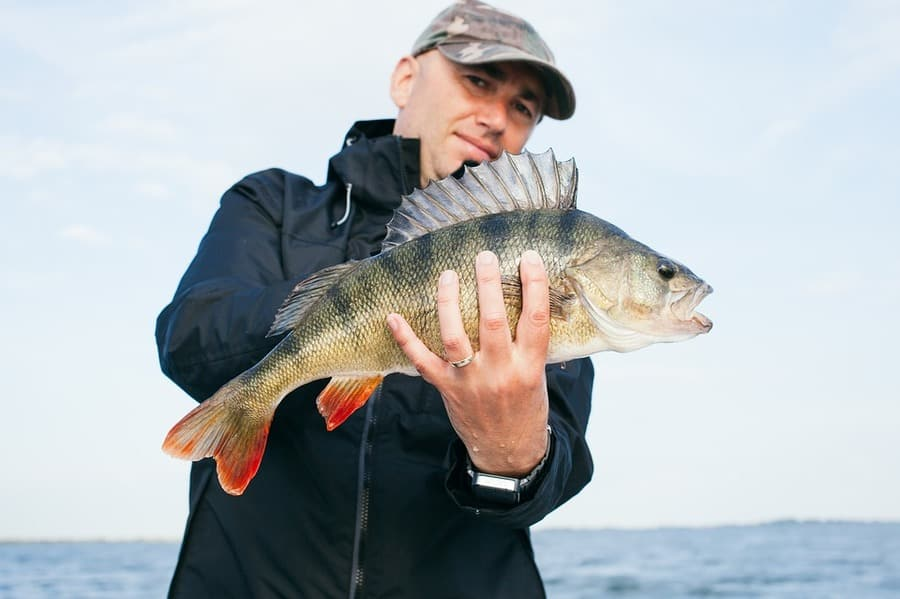 Complete Guide: How to Catch Yellow Perch from Shore
