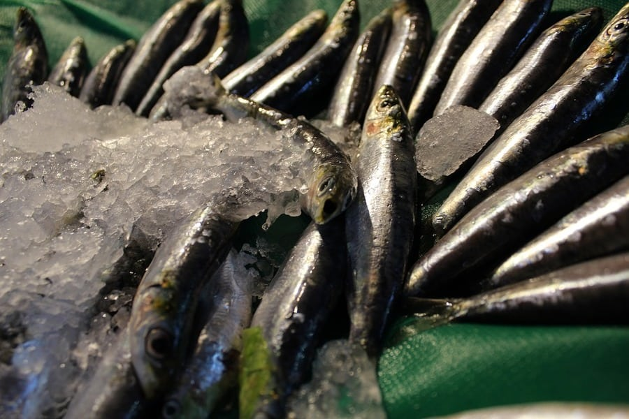 Anchovies as Catfish Bait: They Any Good? (Tips & Tricks)